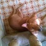 MILO il cane di faimiglia